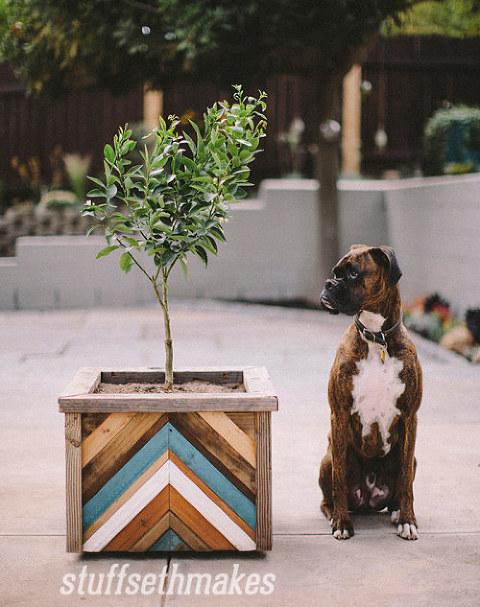 91204-blog-original-recycled-wood-chevron-garden-planter-box-boxer-dog
